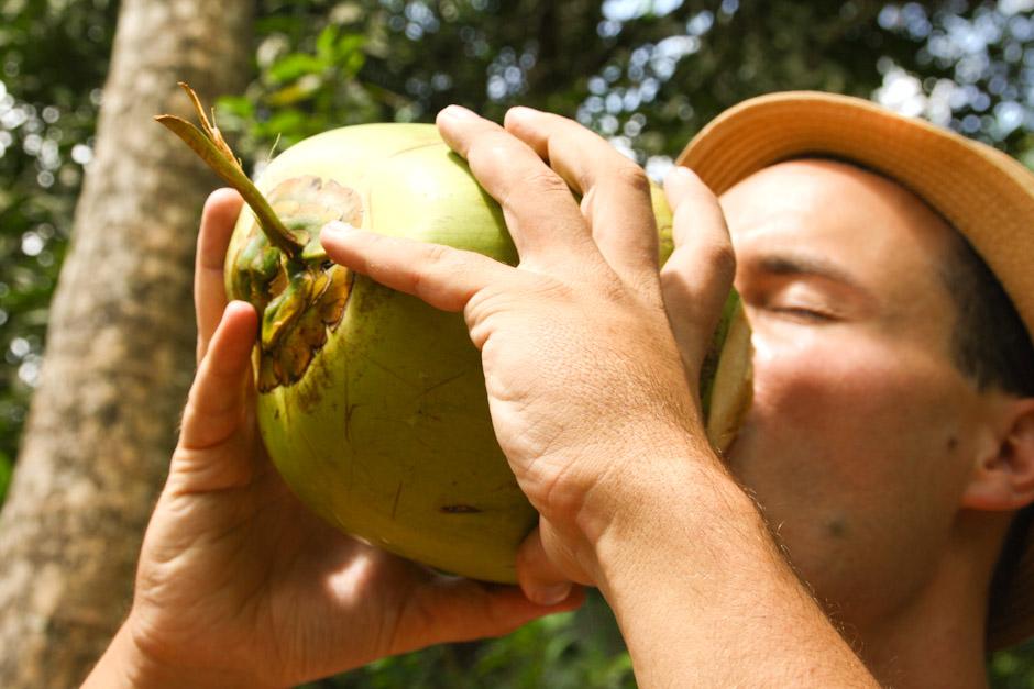 Coconut #04, Sansibar