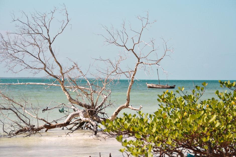 Paradise Beach, Michamvi, Sansibar