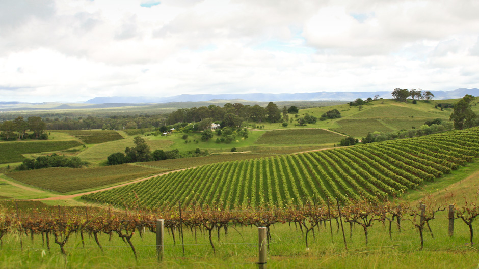 Weingarten im Hunter Valley, New South Wales