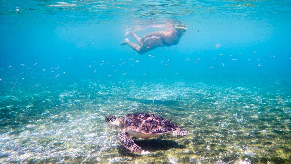Schnorcheln mit Schildkröte vor Gili Trawangan, Indonesien