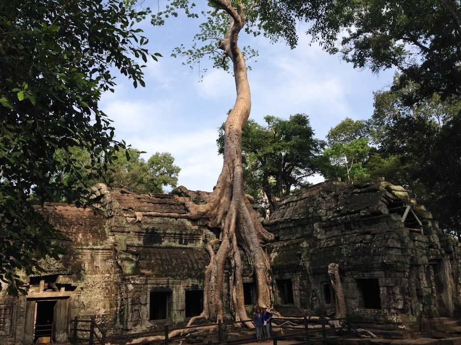 Ta Phrom, Die Tempel von Angkor, Siem Reap