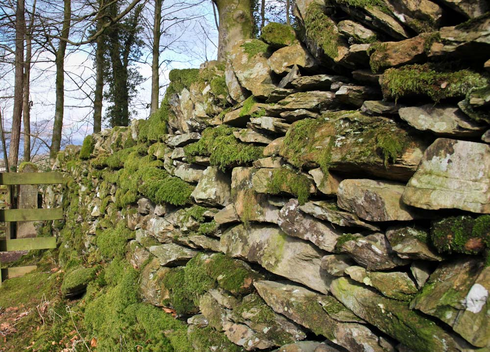 Alte, englische Steinmauer am Dales Way bei Bowness on Windermere, Lake District